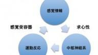 感覚運動システム2
